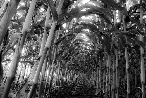 stalks by Flailchest