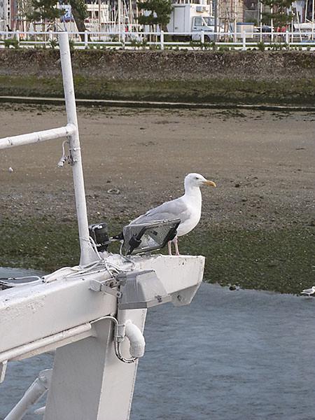 mouette et bateau