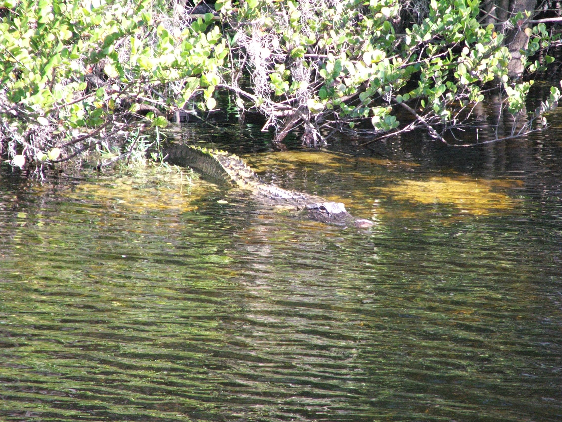 Everglades_US41-6016