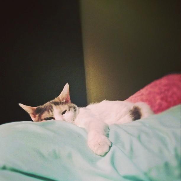 Not waking up. #cats #sleep #bofinkles