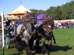 Flaeijel Festival Nieuwehorne 2013