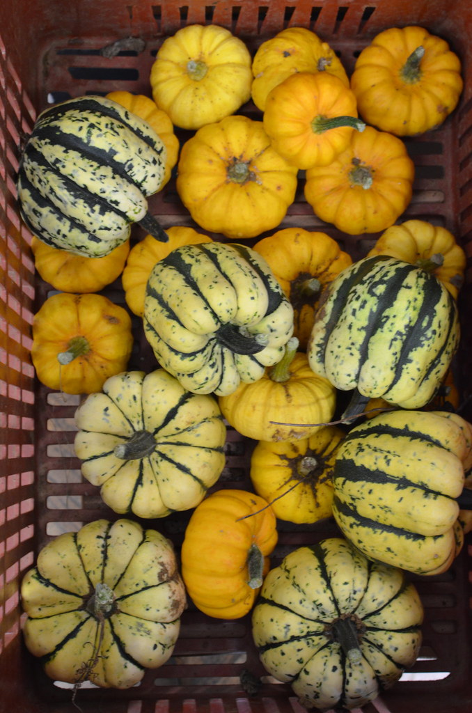 Squashes fit for an autumn festival