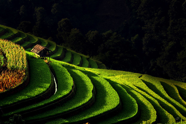 Awesome photography inspiration #41-  newfarmer.photovn