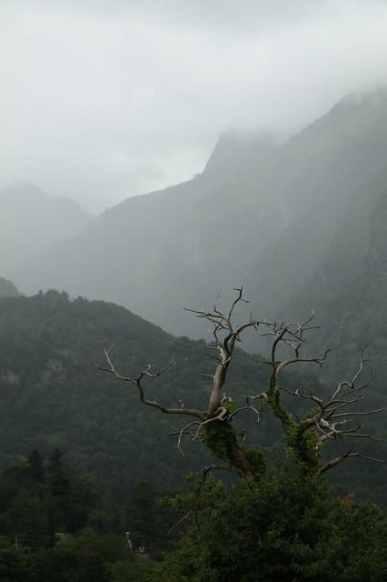 Brouillard d'août