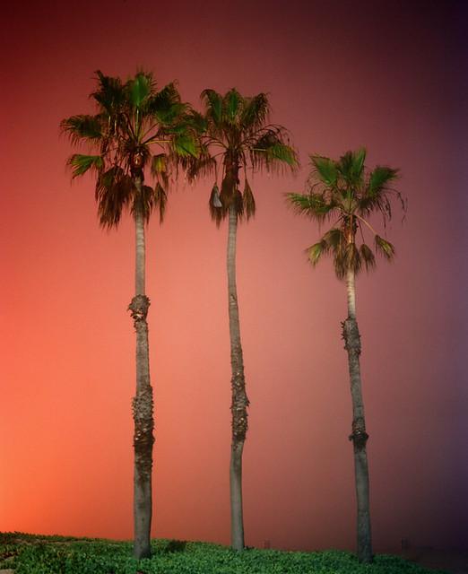 Amanda Friedman, Palms, Dockweiler State Beach