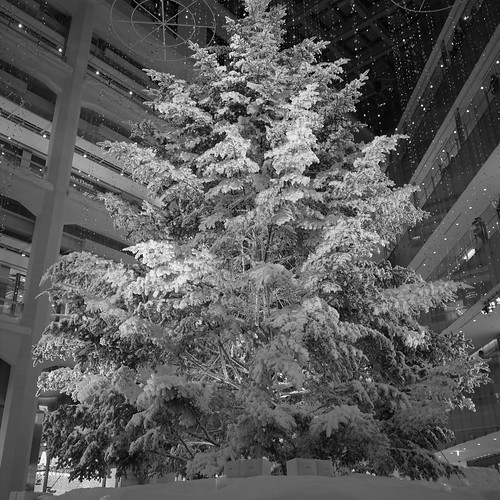 White KITTE tree 02