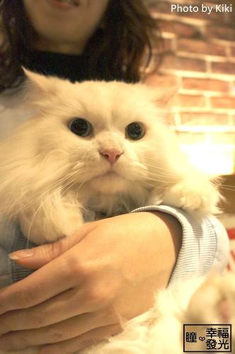 cat_5th (37)