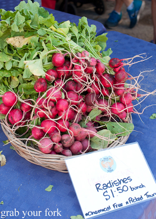 Organic radishes at Frenchs Forest Organic Food Market