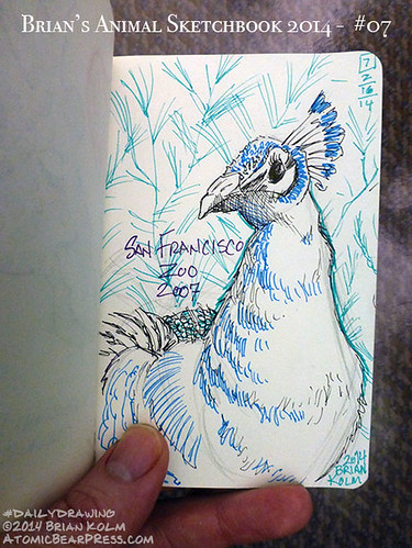 02-16-2014 #dailydrawing #animals peacock