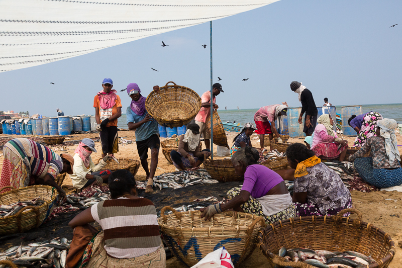 Fish Market, Negombo