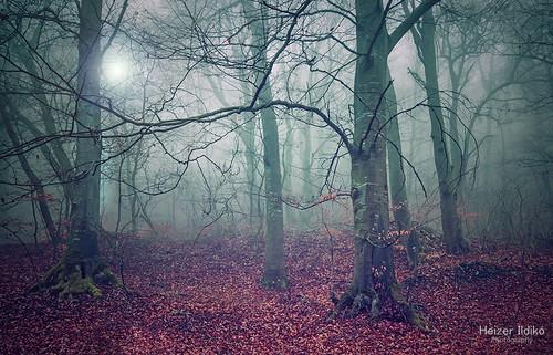 autumn light mist tree nature leaves fog forest lights