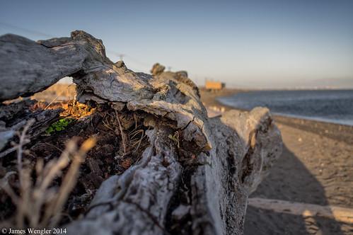 logs olympicpeninsula portangeles driftwood pacificnorthwest k3 clallamcounty edizhook portangeleswashington portangelesharbor
