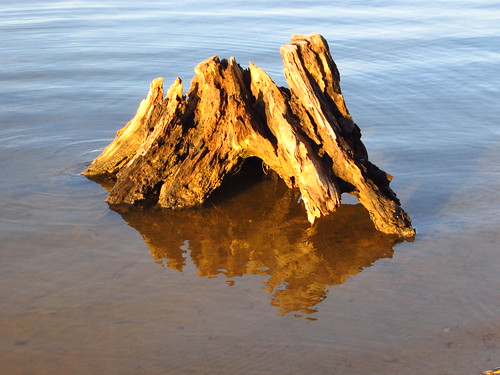 Driftwood by pixygiggles