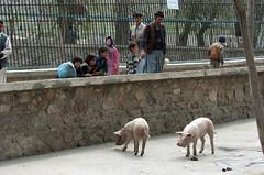 Zoológico de Kabul