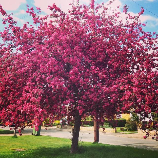 Spring. Blossom.