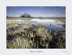March Marsh
