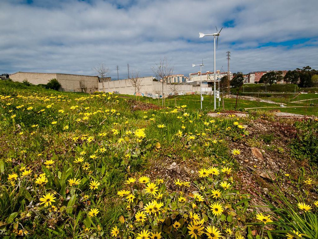 Primavera. #spring #primavera #Coruña #foto