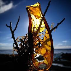 Mermaids Purse. #northcottmouth #cornwall #beachlife #northofbude #atlanticocean #spring #bluesky #beachfind #sealife #kernow #northcott