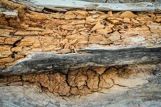 Log Rot, Pigeon River, Ontario