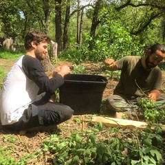 Rob and Charles picking fresh oak leaves to make oak leaf wine. #artistresidency #habitablespaces #sustainability #wwoofusa @leothylion