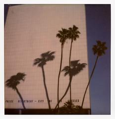 LAPD Palms