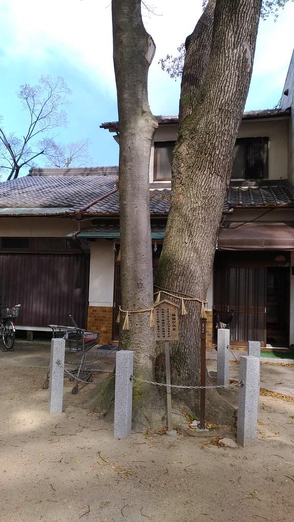 椋橋神社 縁結びの木
