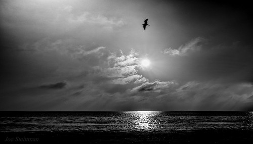 bird bw clouds inspirational spirituak dramatic dramaticsky light illumination beauty naturesbeauty ocean water landscape oceanscape skyscape