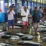 Beruwala Fish Market  GRB_8944