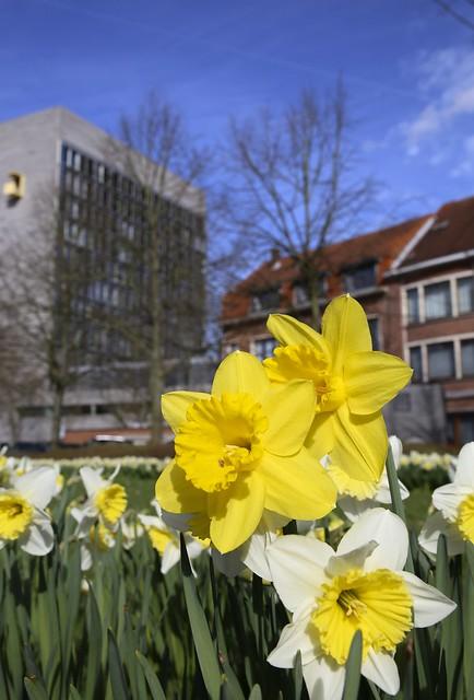 Lente aan het Provinciehuis in Leuven