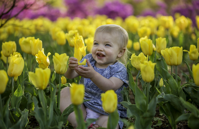 Happy  as a Baby in a Tulip Bed