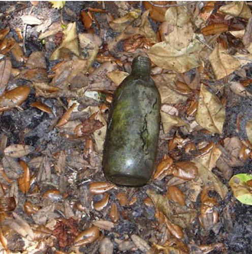 Bottle rooted to the surface by feral swine at a historic archeological site in Florida. Photo by USDA Wildlife Services.