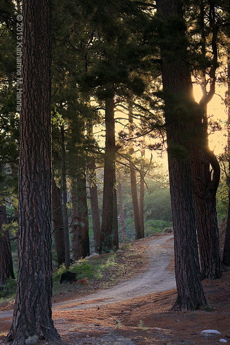 sunset arizona forestpath mtlemmon arizonasunset
