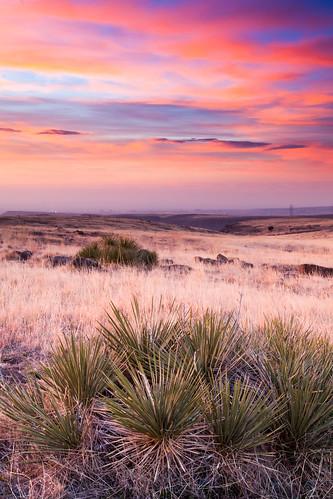 morning sky favorite clouds sunrise golden spring flora colorado unitedstates prairie yucca jeffersoncountyopenspace northtablemountainpark