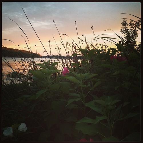 """Lake """"weeds"""""""