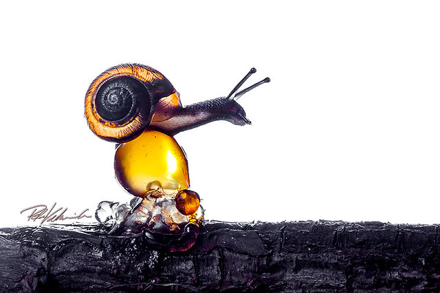 Snail passing over resinball