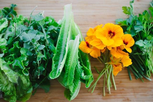 spring salada