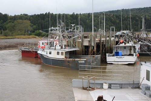 Bay of Fundy, Tide Coming in