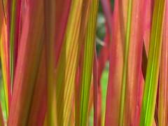 Florale Flammen