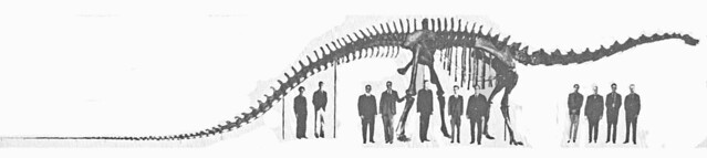 Dipsy Goes Down: Dr. Bakker blogs about our Diplodocus de-installation