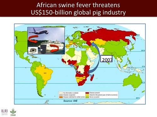 Africa swine fever threatens US$150-billion global pig industry
