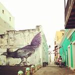 Image of Viejo San Juan near San Juan. streetart art square graffiti oldsanjuan puertorico cock squareformat pr rise tagging viejosanjuan sanjuanantiguo iphoneography instagramapp uploaded:by=instagram foursquare:venue=4f10827ce4b0aabf16b8d3f2