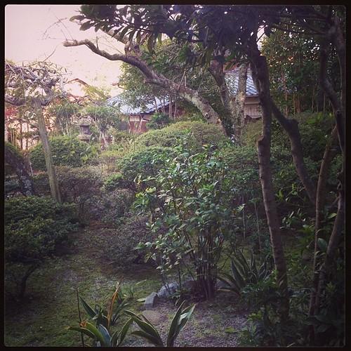 明後日、先祖祭なので久々に蚊に刺されながら庭掃除した。隣家の古い大木からの葉っぱと枝が大量に落ちてた