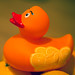 duck a l'orange... HWWHDT :) by Dawn Porter