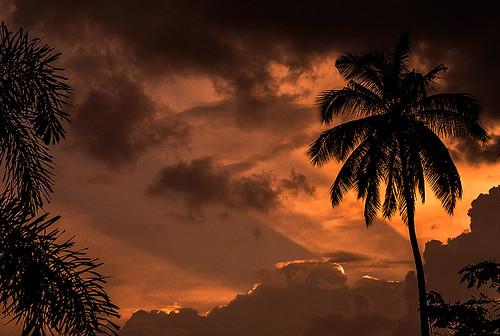 sunset sky orange sun india color tree clouds landscape coconut bangalore rays karnataka freedompark challengeyouwinner