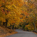 Fall foliage in Palisades Interstate Park