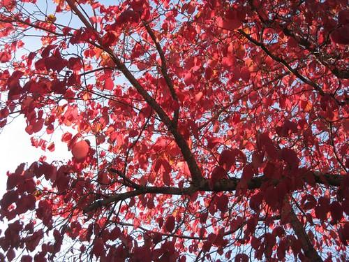 Dogwood leaves photo by Aiyana
