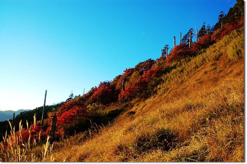 巒大花楸(369山莊) 4