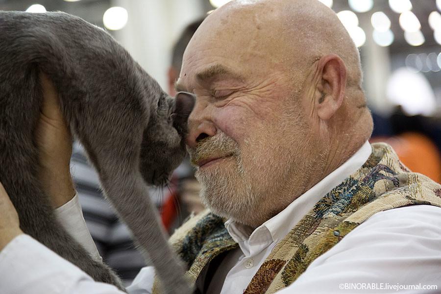 "XII International Cat Show ""Grand Prix ROYAL CANIN» - 2013"