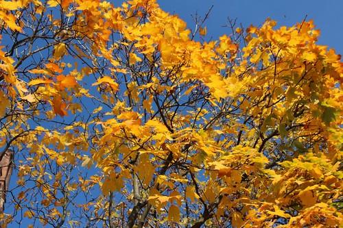 berlin-autumn