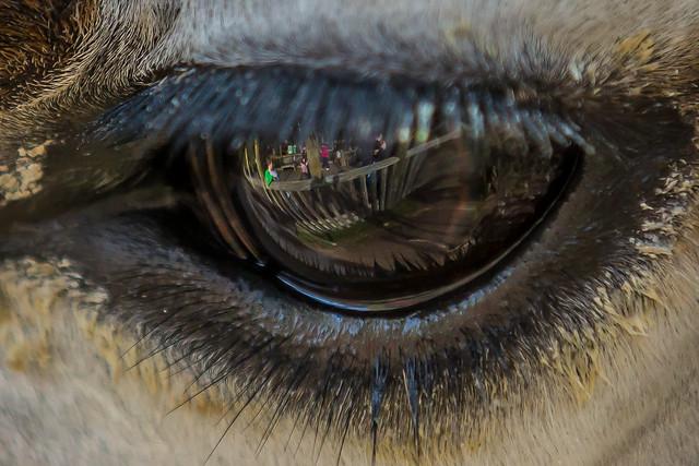 Bill Varney - In Your Eyes